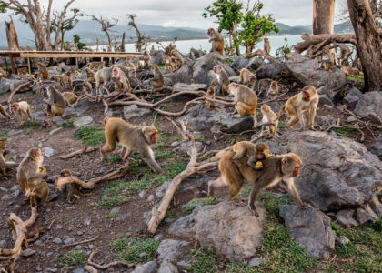 Primal Fear: Can Monkeys Help Unlock the Secrets of Trauma?